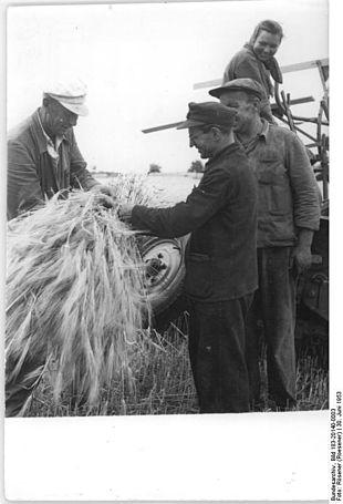 Raccolta dell'orzo in Germania, 1953.