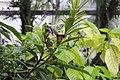 Butterfly Rainforest FMNH 39.jpg