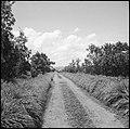 CH-NB - Belgisch-Kongo, Thysville (Mbanza Ngungu)- Landschaft - Annemarie Schwarzenbach - SLA-Schwarzenbach-A-5-26-017.jpg