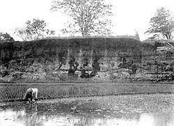 Pasinawangan sawah kang ana ing Desa Darma taun 1939