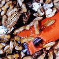 CSIRO ScienceImage 2183 Termite Colony.jpg