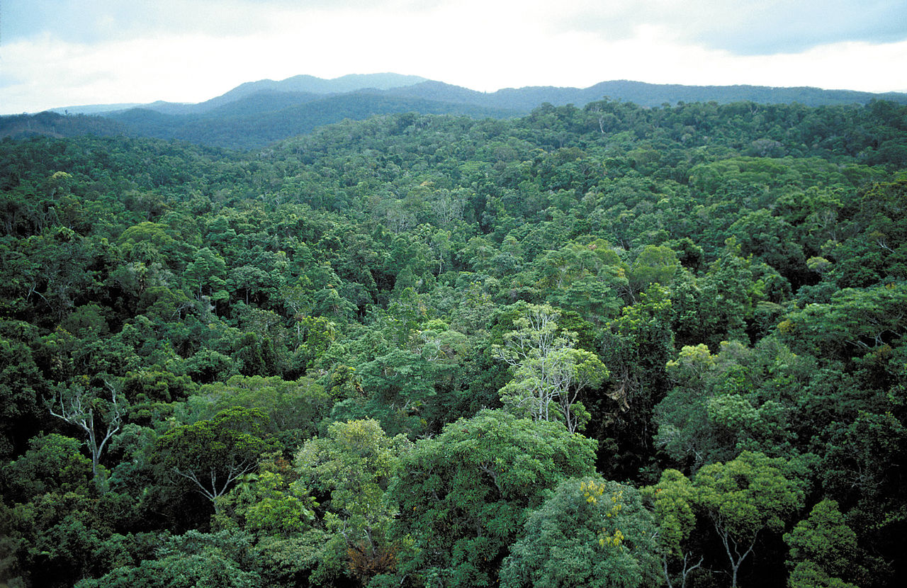 tropical rainforest biomes essay Biomes of the earth essay major biomes include tropical rain forest the tropical rain forest is the most complex biome in the world.
