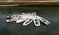 Canoes de mer, la Rabine, Vannes, Morbihan.jpg