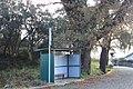 Carvalho-roble situado no lugar da Carvalheira, Guimarei - 11.jpg