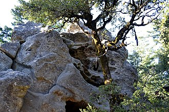 Castle Rock State Park (California) - Image: Castle Rock State Park rock formation