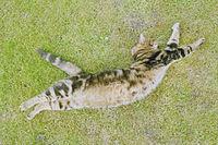 Cat full length.jpg