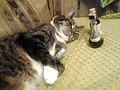 Cat with miniature bottles.jpg