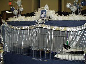 Cat show - Image: Catshow
