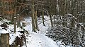 Catwalk Wood - geograph.org.uk - 1625497.jpg