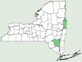 Centaurea phrygia NY-dist-map.png