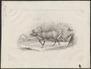 Cervus tarandus - 1700-1880 - Print - Iconographia Zoologica - Special Collections University of Amsterdam - UBA01 IZ21500079.tif