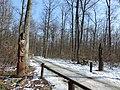Cesta k vyhlliadkovej veži - panoramio (1).jpg