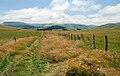 Cezallier paysage 0707C.jpg