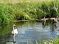 Charlecote park - panoramio (10).jpg