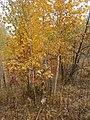 Cherkas'kyi district, Cherkas'ka oblast, Ukraine - panoramio (345).jpg