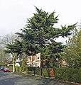 Chestnut Avenue, Hessle - geograph.org.uk - 1189557.jpg