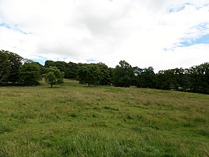 Chillingham cattle - A view of the grazing in Chillingham Park