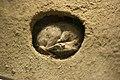 Chipmunk Hibernation.jpg