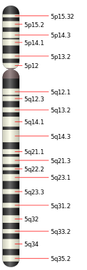 Chromosome 5.svg