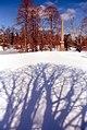 """Cincinnati - Sprint Grove Cemetery & Arboretum """"Cypress Trees, Shadows & Obelisk"""" (4377774326).jpg"""