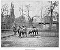 Clément Maurice Paris en plein air, BUC, 1897,130 Dromadaires et Chameaux.jpg