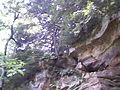 Cliff at Turkey Run.jpg