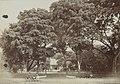 Collectie NMvWereldculturen, RV-A440-ee-35V, Foto, 'Ingang naar een park te Batavia', fotograaf Woodbury & Page, 1924-1932.jpg