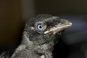 Μεγάλο πουλί μικρή γκόμενα