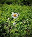 Columbia Wildlife Management Area (Revisit) (9) (14076425279).jpg