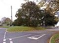 Conker Tree, Westbury - geograph.org.uk - 1013249.jpg