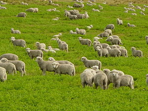 Psalm 23 is often referred to as the Shepherd'...