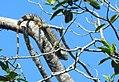 Costa Rica 84.DSCN4308-new (30761838660).jpg