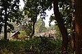 Countryside - Sasapasi - Dhenkanal 2018-01-25 9352.JPG