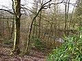 Craichie Glen - geograph.org.uk - 675335.jpg