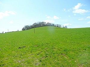 Creech Hill - Creech Hill