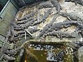 Crocodile pit (9163268937).jpg