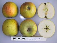 Cross section of Fara Nume, National Fruit Collection (acc. 1948-649).jpg