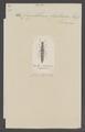 Cryptobium - Print - Iconographia Zoologica - Special Collections University of Amsterdam - UBAINV0274 015 01 0014.tif
