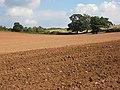 Cultivation, cultivation, cultivation - geograph.org.uk - 969548.jpg