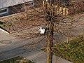 Cwany kocur -) - panoramio (1).jpg
