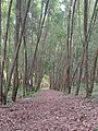 Cycling Trail at Turahalli Forest.jpg