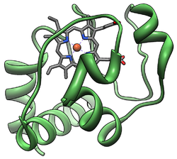 Cytochrome C.png