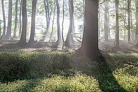 Dülmen, Rorup, NSG Roruper Holz -- 2021 -- 8145-9.jpg