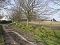 Daffodils by Upper Welson Farm - geograph.org.uk - 378203.jpg