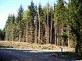 Dalbeattie Forest - geograph.org.uk - 392912.jpg