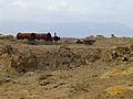 Dallol-Ethiopie (71).jpg