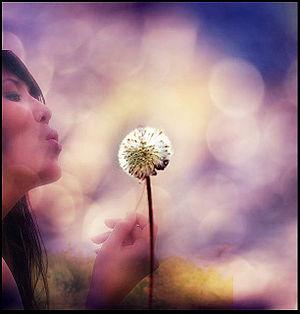 dandelion kisses