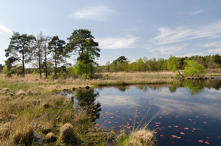 "National park of the Netherlands ""De Meinweg"" - moorland with small lake"