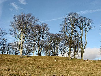 English: Deciduous trees on Ewe Hill Viewed in...