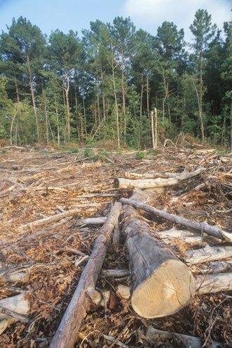 Deforestation in Nigeria - Deforestation in Nigeria